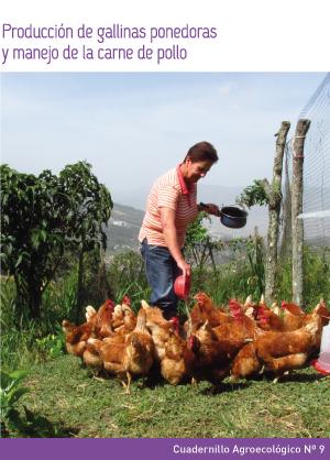 Producción de gallinas ponedoras y manejo de la carne de pollo